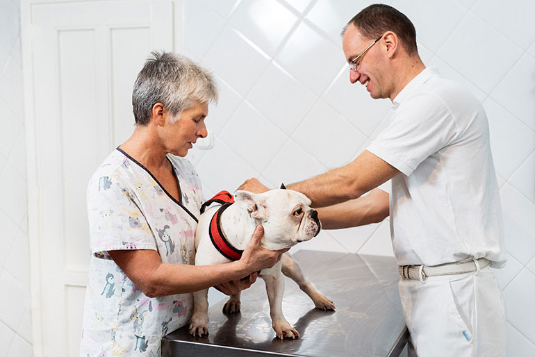 cityvet-treatment-and-examination-of-musculoskeletal-diseases